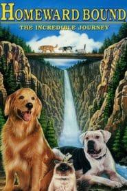 Homeward Bound The Incredible Journey (1993) สองหมาหนึ่งแมว ใครจะพรากเราไม่ได้